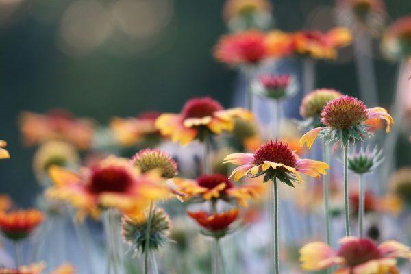 Szárazságtűrő növények, melyeket gyerekjáték gondozni