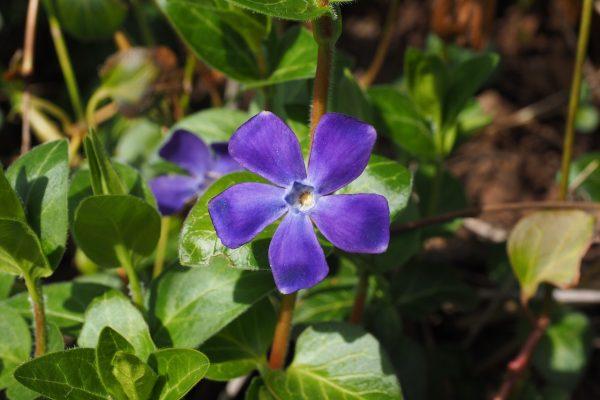 Talajtakaró növények, melyek nem igényelnek sok törődést