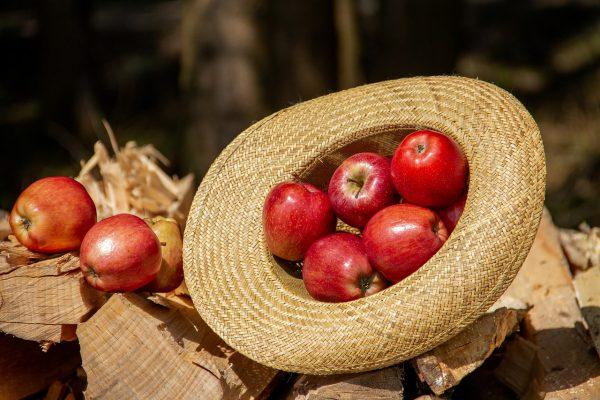 Gyenge alma és körte termés várható idén
