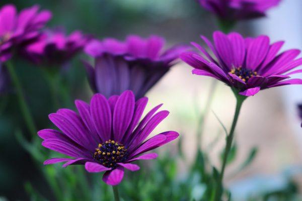 Cseppecskevirág gondozása – Részletes útmutató