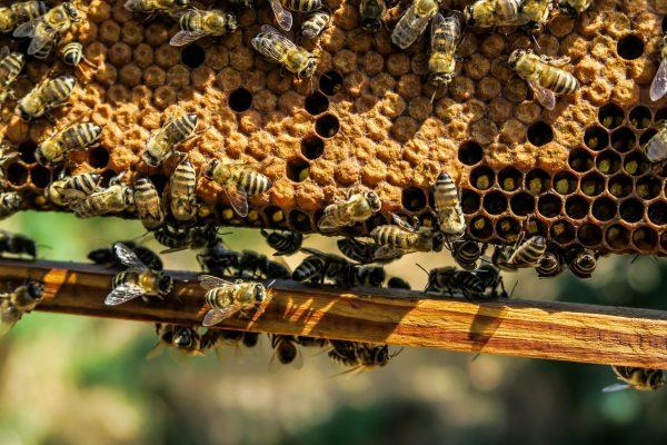 Méhészeti egyesület: az elmúlt 50 év legrosszabb méztermése várható idén