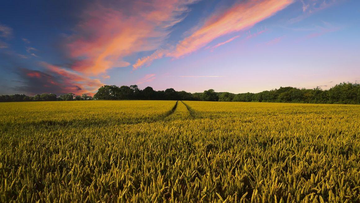 Augusztus 31-től újra igényelhető a dísznövénytermesztők átmeneti támogatása