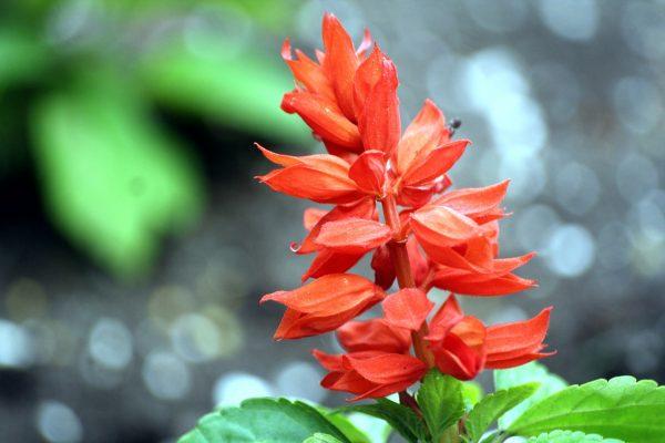 Paprikavirág gondozása – Részletes útmutató