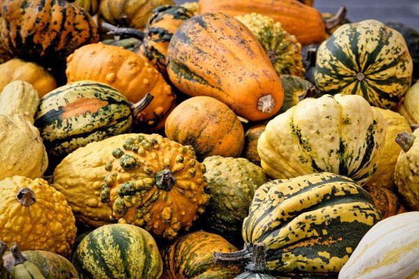 NAK: A dekorációs célra szánt tökök közül nem mind ehető