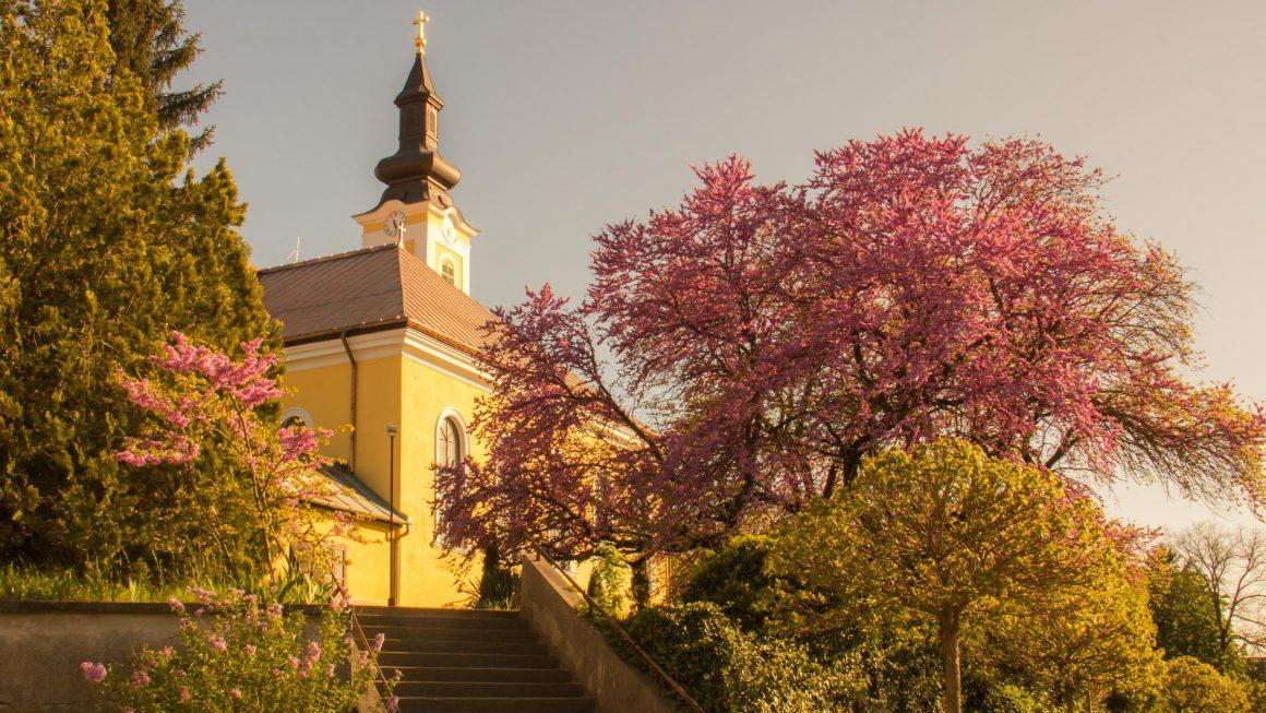 Február végéig lehet szavazni az Európai év fája verseny jelöltjeire
