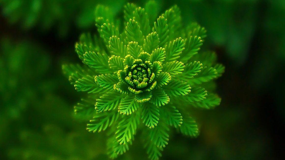 A növények kétötödét kihalás fenyegeti