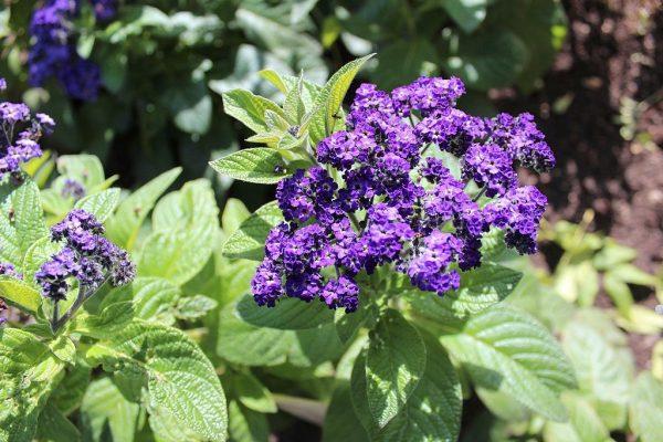 Vaníliavirág gondozása – Részletes útmutató