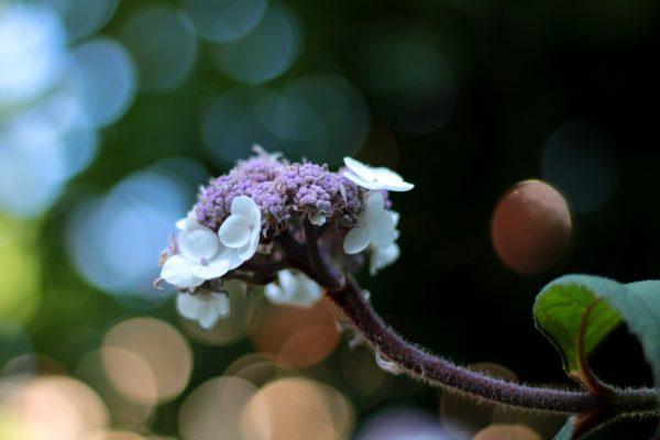 15 virágzó cserje, mely elbűvölő virágokkal díszít