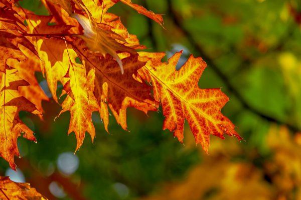 Melegebb volt az átlagnál az idei ősz