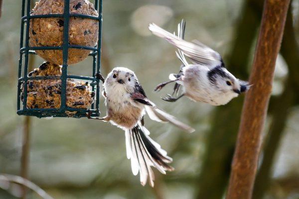 MME: enyhe a tél, kevesebb madár látogatja az etetőket