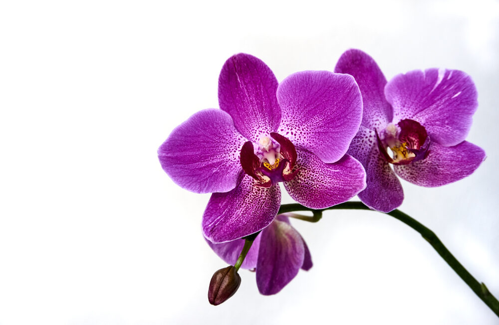 Hogyan gondozzuk az orchideát, hogy szépen virágozzon