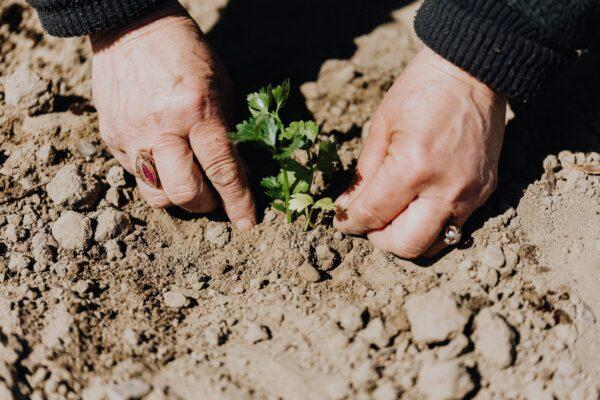 Tápláló növények világa – Avagy, fedezd fel milyen növény fogyasztható, amiről sose gondoltad volna!